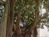 Baum und Mensch