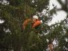 Pause im Baum