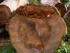 Shnittflaeche Baumstamm